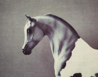 horse, fine art photography