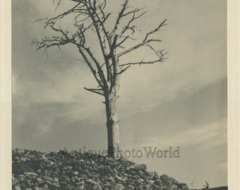 Lonely dead tree Sterility antique art photo by Niven St. Claire-McKenzie