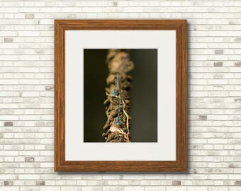Damselflies On Rope   Nature Print   11x14 - FREE SHIPPING!