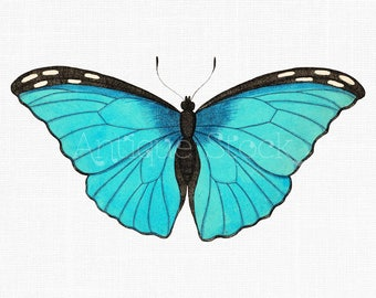 Butterfly Clipart 'Blue Morpho' Vintage Illustration Digital Download Image for Invitations, Scrapbook, Posters, Collages, Crafts...