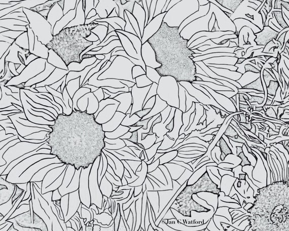 Sunflowers 1 Adult Coloring Pages Coloring Page Printable