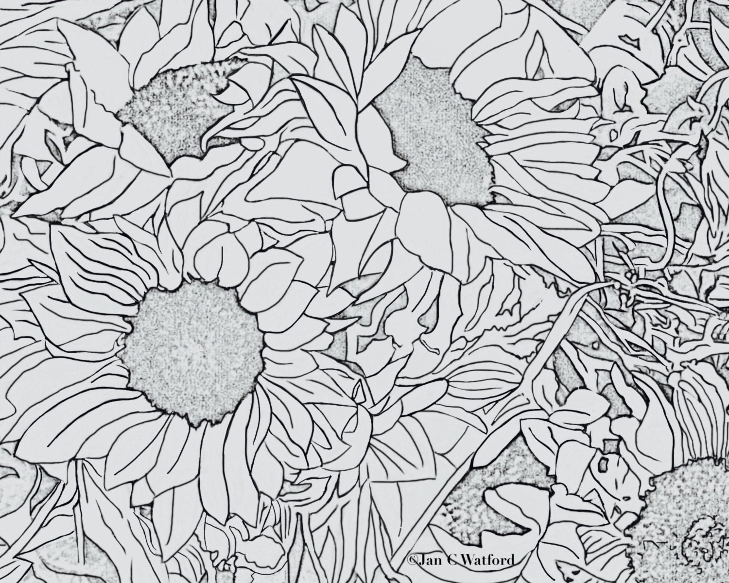 Sunflowers 1 adult coloring pages coloring page printable for Stress relief coloring pages online