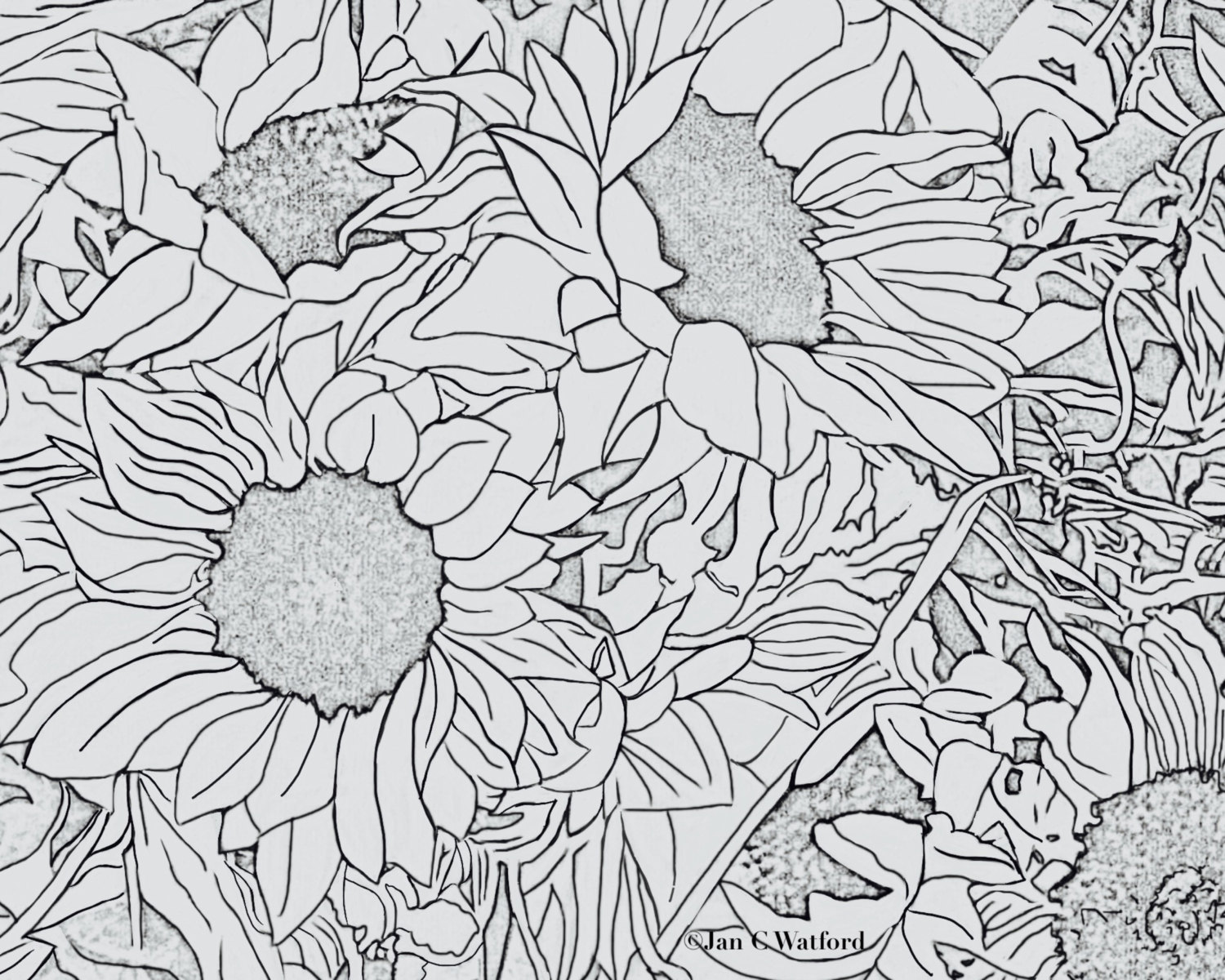 Sunflowers 1, Adult Coloring Pages, Coloring Page Printable, Gray ...
