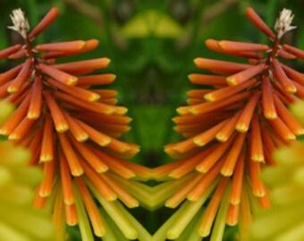 Poker Flower
