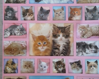 Stickers cats stickers