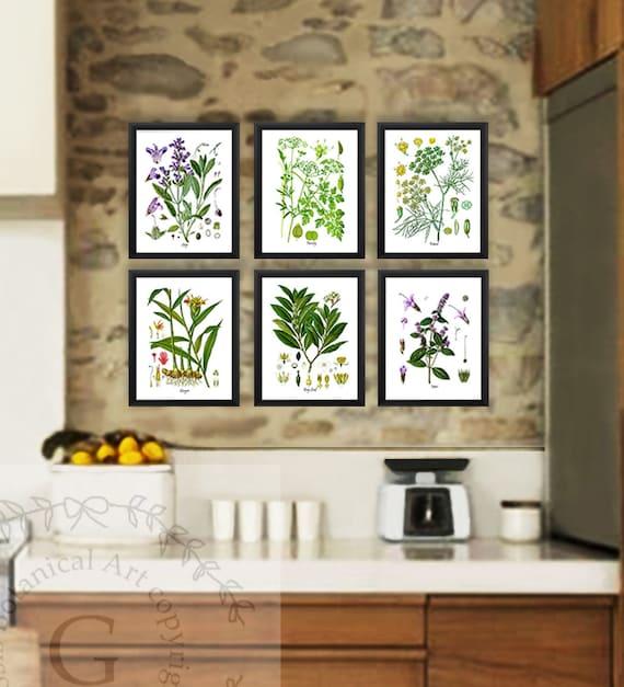 Kitchen Herb Botanical Prints Set Of 6 Kitchen Herbs Wall Art