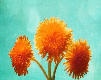 Dandelion Art Print - Orange Aqua Surreal Flower Nursery Children Room Home Decor Wall Art Photograph