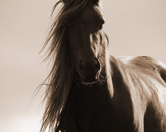 """Inspirational quote quotation, horse photo, """"horses give us the wings we lack""""  art print, horse quote"""