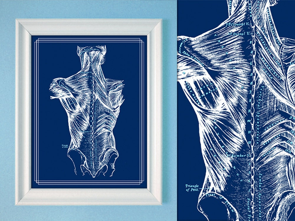 Grays Anatomy Muscles Of The Back Massage Room Poster Anatomy