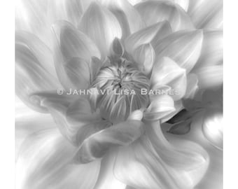 BOLD BOTANICALS . White Dahlia . Hand Printed and Signed by the artist . Developing Light Photographic Arts . jahnavi . i2iPhoto