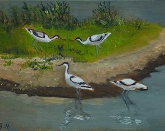 "Avocets, Slimbridge, small unframed original oil painting, canvas board 5x7"""