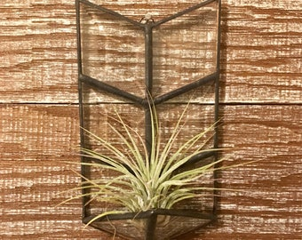 Clear Glass Air Plant Holder. Airplant Holder. Succulent. Boho Decor. Home Decor. Housewarming. Mother's Day. Mothers Day. Unique Gift.