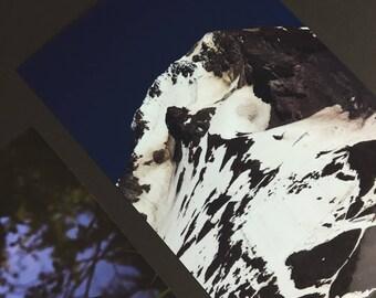 3pack - Trillium Lake - Mt Hood - Photography