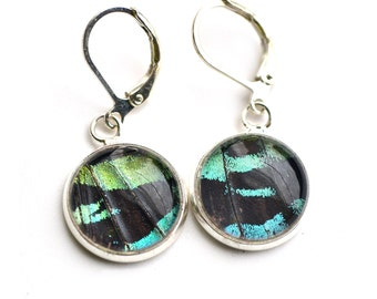 Real Moth Wing Earrings. Madagascan Sunset Moth. Butterfly Dangle Earrings. Real Blue Morpho Butterfly Wing Jewelry.