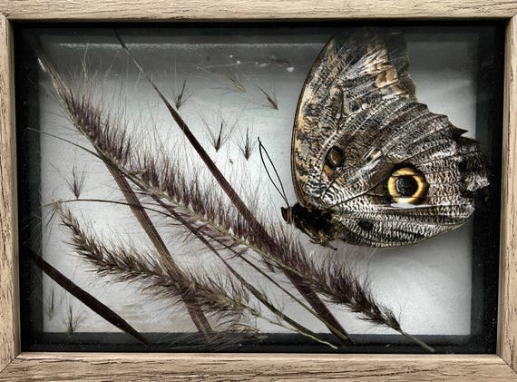 Real owl butterfly and purple fountain grass wall hanging