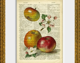 APPLE COLLAGE recycled book page art print - an upcycled antique dictionary page with a retooled antique flower illustration - wall art