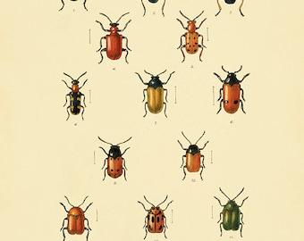 Antique Insect art print Beetle art print insect wall art Vintage insect decor Antique Prints entomology art Natural History art Bug art