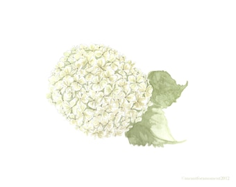 WATERCOLOR HYDRANGEA, Reproduction, 8x10 Print, Green, White, Flower