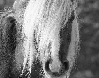 Equine art, rustic horse photo, black and white, fine art photo print, new forest pony, animal photo, various sizes,