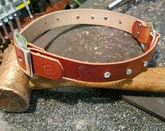 Leather bird dog collar with a little bling