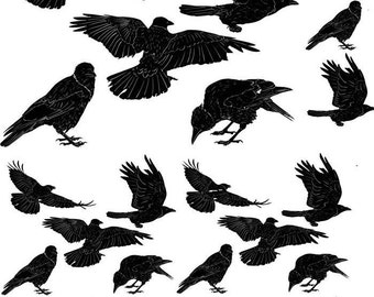Ravens Crows - Ceramic Decals- Enamel Decal - Fusible Decal - Glass Fusing Decal ~ Waterslide Decal - 49713