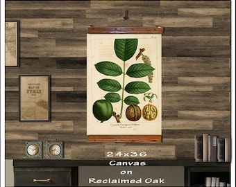 Walnut Hanging Botanical Print. Antique Pull Down Chart. Vintage School Chart. 24x36 Hanging Charts, Walnut 228