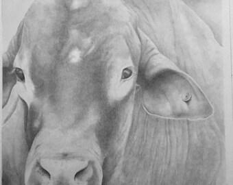 Big Ben the bull portrait