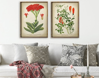 BOTANICAL Print SET of 2 Red Flowers Poster, Propeller Plant, Chilean glory flower, Botanical Posters, Vintage Flowers, Botany Prints,