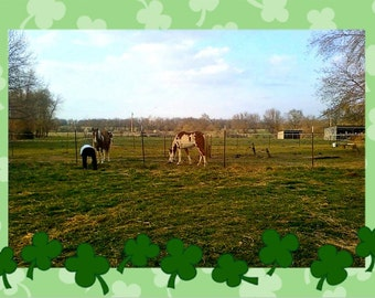 Organic Horse or Poultry Manure for your Garden