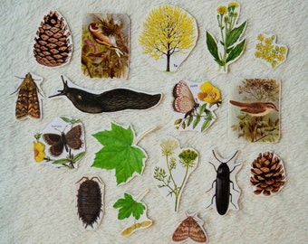 Nature Journal Stickers - Pack of 17