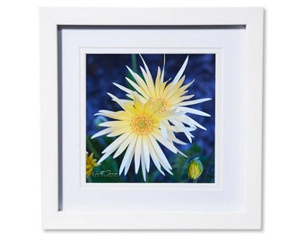 Gerbera Photo Print or Canvas