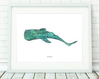 Whale shark Lorenzo
