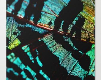 Sunset Moth - Canvas Wall Art - Fine Art Print - Butterfly Photography - Nature Photography - Canvas Wall Art - Green - Wall Art Canvas