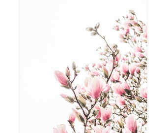 Magnolia Flower Photography Print