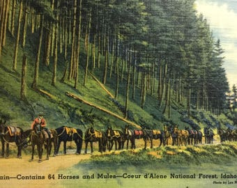Vintage Postcard Coeur d'Alene Idaho National Forest ID Pack Train Horses Mules Mint Linen