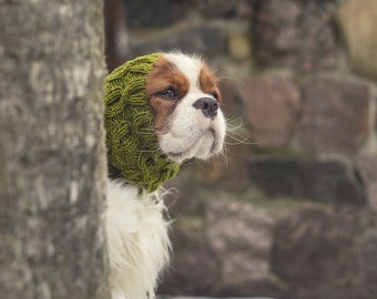 Small green dog snood //  ready to ship // for Cavalier King Charles Spaniel or similar // hand-knit 100% wool dog snood //