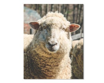 Sheep Art Print, Sheep Wall Art, Sheep Photo Art, Sheep Nursery Print, Farmhouse Wall Art, Rustic Farmhouse Decor, Farm Animal Print