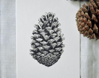 Pinecone - Digital Art Print. Ink illustration from the Inktober series.