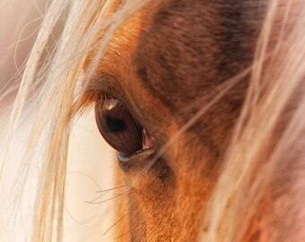 Horse Photography Horse Art