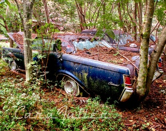 1960s Lincoln Continental in woods Photograph