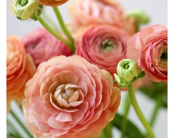 Home Decor - Gift For Mom - Flower Photograph - Nature Photography - Pink Print - Wild Ones- Ranunculus Art -Fine Art Photograph - Oversized