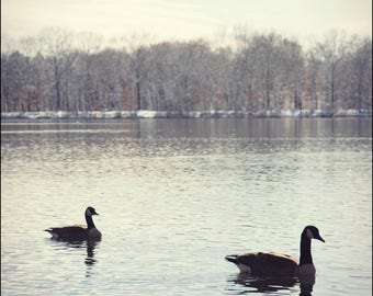 two geese, 2016.