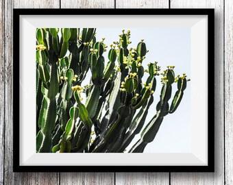 Cactus impression téléchargement--Cactus imprimable mur Art--Cactus Decor--Printable Wall Art--sud-ouest Decor--désert mur Art Print