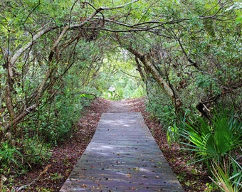 Path to Paradise, Foilage, Plants, Greenery, Boardwalk, Beach, Isle of Palms, Charleston, South Carolina