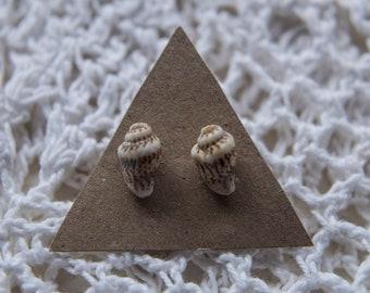 Small Seashell Studs, Shell Earrings, Boho Earrings, Sterling Silver