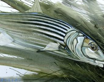 Eyer's Bonefish