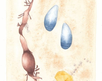 Original watercolour painting, Blue seashells, seaweed and a stone that appears as amber, 11*13 cm