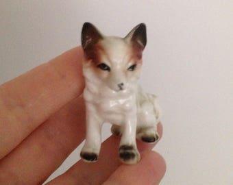 Miniature dog. Pomeranian dog.