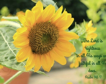 2. Yellow Sunflower; Photo greeting card; Nature art print; Gift; Inspirational Scripture Psalm 145:17