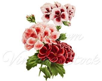 Wall Art Flower Print, Flower Clipart, PNG Botanical Printable Flower, Vintage Illustration for Print, Digital Artwork INSTANT DOWNLOAD 2553